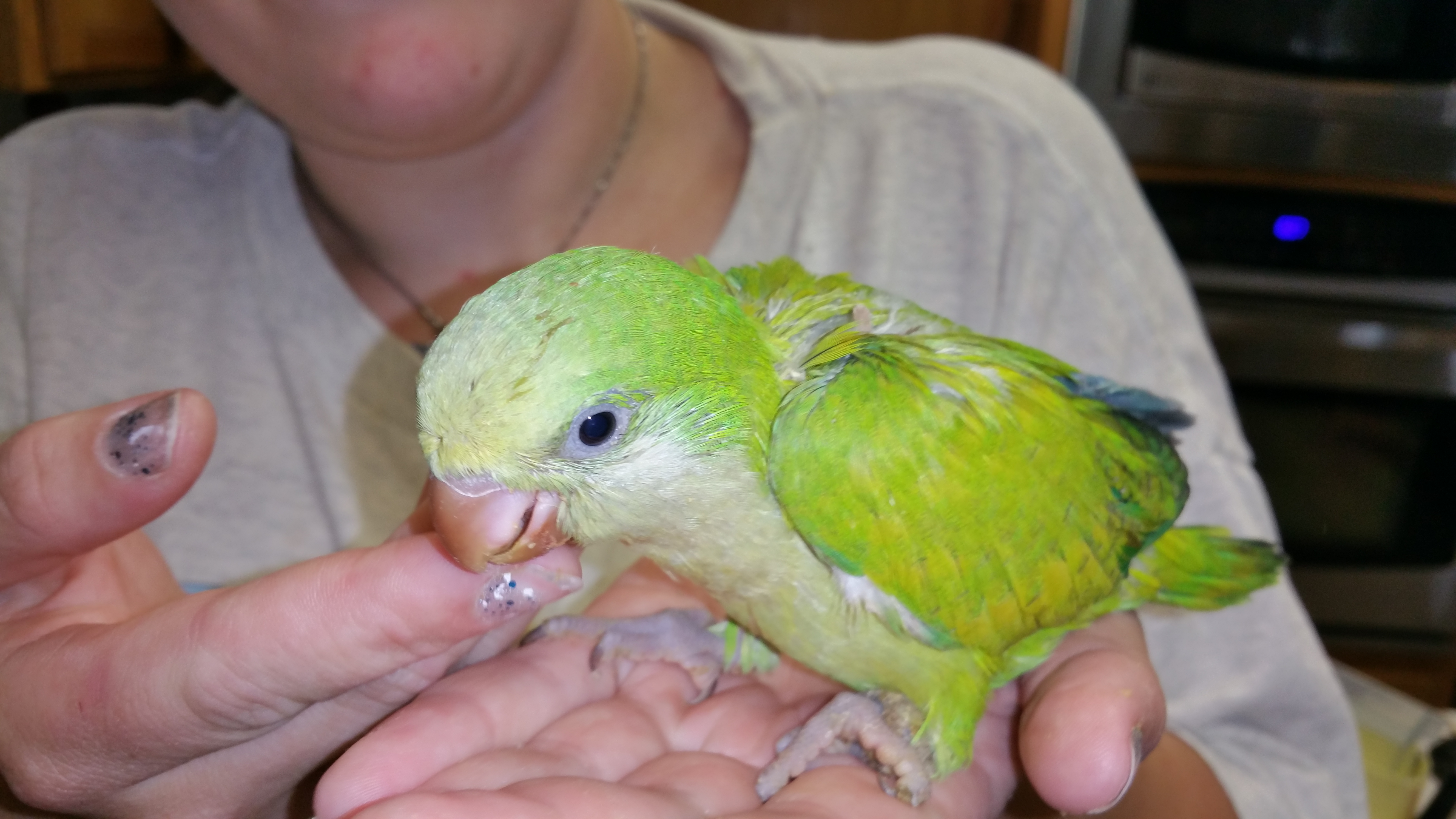 quakers u2026 the weeble wabbles of the bird world u2026 lots of colors to